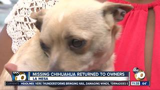Missing Chihuahua returned to owners