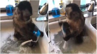 This monkey is very eager to help wash the dishes