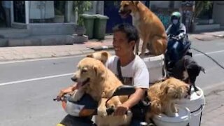 Man rides motorcycle with six dogs