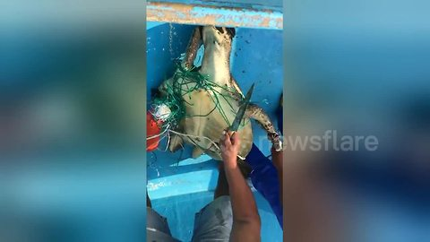 Fishermen rescue sea turtle entangled in fishing net