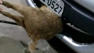 Deer implaled in car bumper makes miraculous recovery