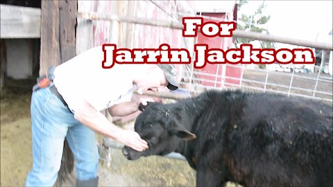 """Jarrin Jackson (Live Local) """"Gnaw on a Cow"""" Challenge"""