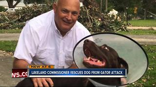 Lakeland Commissioner rescues dog from gator attack - Video