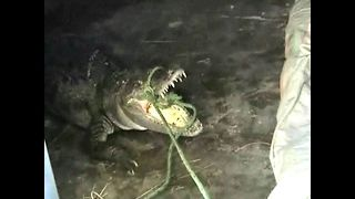 Crocodile Caper - Video