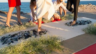 Wedding on glass – Couple walk over shards on special day - Video