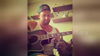 Cute cat cuddles up to owner when he plays guitar