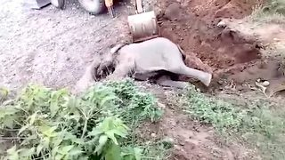 Heartwarming moment Indian forest officials rescue elephant calf from ditch