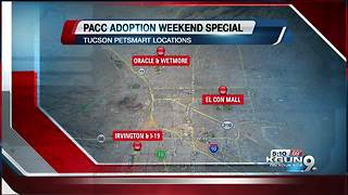 PACC celebrates National Adoption Weekend by waiving adoption fees - Video