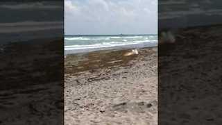 Military Flare Lands on a Florida Beach - Video