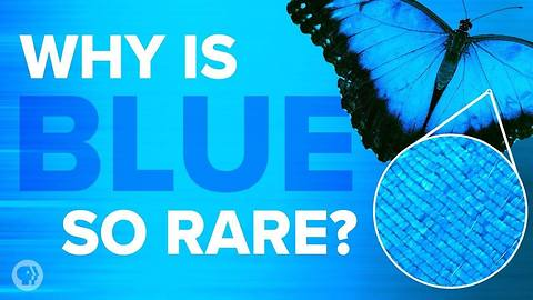 Here Is Why Blue Is Such A Rare Color In Nature