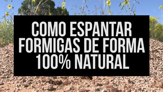 Acabe com as formigas de forma 100% natural! - Video