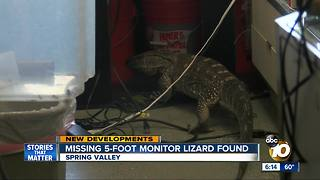 Missing 5-foot monitor lizard, Bubbles, found in Spring Valley