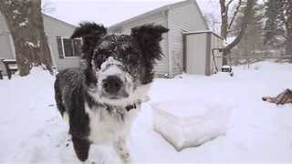 Dog Plays on Rug in the Snow, Has Time of His Life - Video