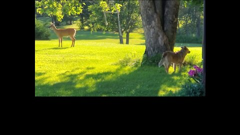 Dog and deer living in peace