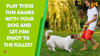 Top 4 Fun Games To Play With Your Dog *