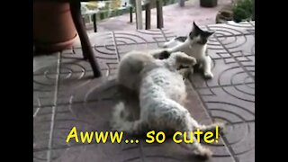 Cat and Dog adorably play like besties