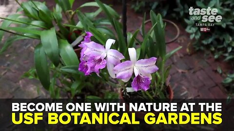 Become one with nature at the USF Botanical Gardens | Taste and See Tampa Bay