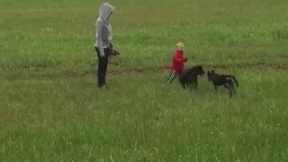 Boy Running in Field Gets Run Over By Dogs