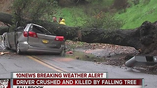 Driver crushed, killed by falling tree - Video