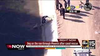 Dog rescued from Phoenix canal, runs off - Video