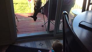 Watch Closely As Baby Becomes Best Friends with Squirrel - AWW!