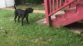 Mom & Pups rescued today from deadly heat - Stray Rescue of St.Louis - Video