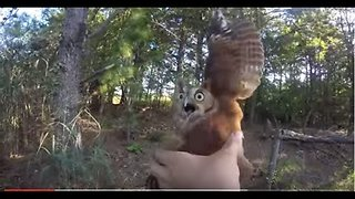 Owl Tangled In Fishing Line Didn't Quite Like Being Rescued - Video
