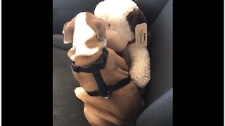 Puppy appears to be smooching his stuffed animal - Video
