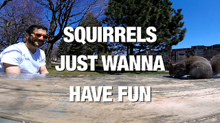 Squirrels Just Want to Have Fun - Video