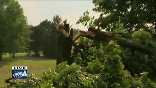 Trees down after storms hit Milwaukee's south side - Video