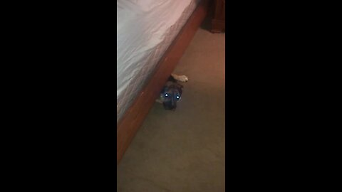 Silly pup no longer fits under the bed, struggles to get out