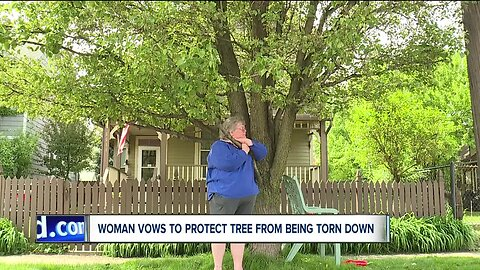 Out on a limb: Woman's defiance buys beloved tree more time