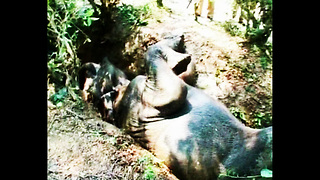 Elephant Rescued from Ditch - Video