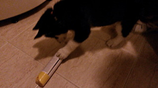 Puppy vs air freshener bottle  - Video