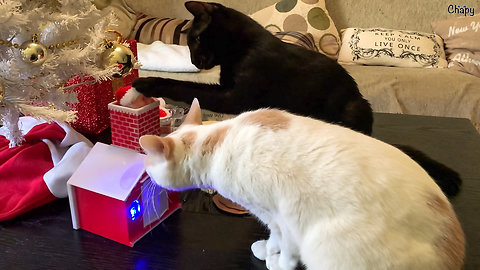 Festive cats fascinated by singing Santa toy