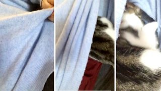 Cosy kitty! Cat finds place to sleep under owner's jumper - Video