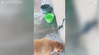 What this dog does with water is totally bizarre!