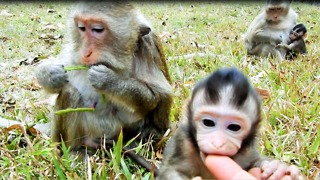 Baby Monkey Tito Want To Play But Mom Scare Of People Catching Her Baby  - Video