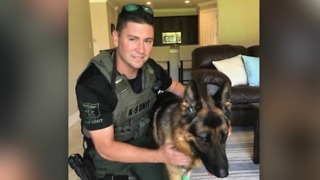Martin County Sheriff's Office K9 Kaspar recovering after surgery - Video