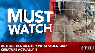 Authorities Identify What 'Alien-Like' Creature Actually Is - Video