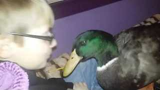 Nibbles the Duck Reads With His Best Friend Jonny
