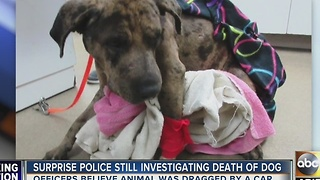 Still no leads as police investigate death of Surprise dog - Video