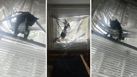 Cat-astrophe: Cat sitter catches kitten tangled in fifth set of destroyed blinds