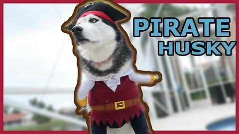 Husky shows off his epic pirate costume