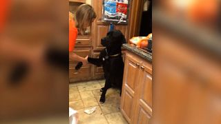 Guilty Dog Makes Adorable Apology With Puppy Dog Eyes - Video