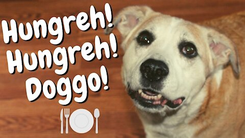 Hangry Dog Barking Loudly For More Food