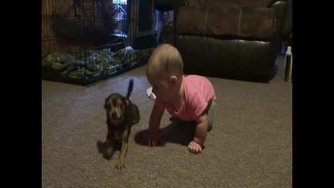 Dog Teaches Baby Girl How to Crawl – SO CUTE