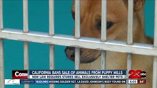 Governor Jerry Brown makes California first state to ban puppy mill sales at pet stores - Video