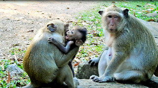 Sweetpea Play With Baby Monkey Lol - Video