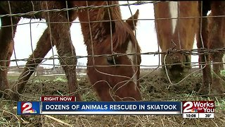 Dozens of animals rescued in Skiatook